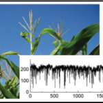 Scale-invariant structure of size fluctuations in plants