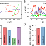 Transient superdiffusion and long-range correlations in the motility patterns of trypanosomatid flagellate protozoa