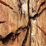 Inside Science: Wood And Charcoal Cut Earthquake Research Down To Size